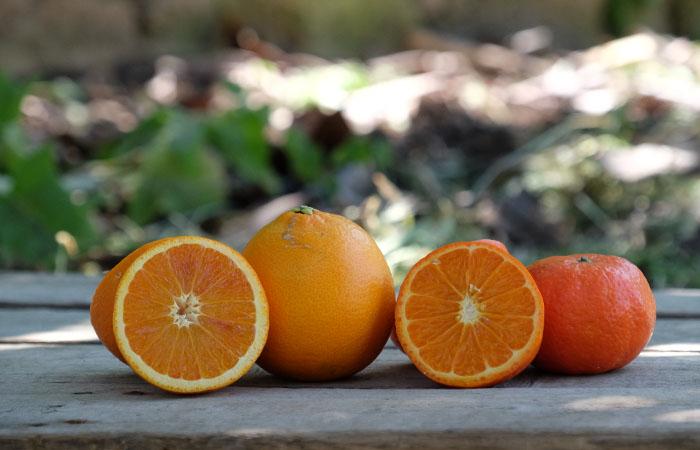 Cubotto di Tarocco - Clementine BIO (9,5+2)  11,5 kg