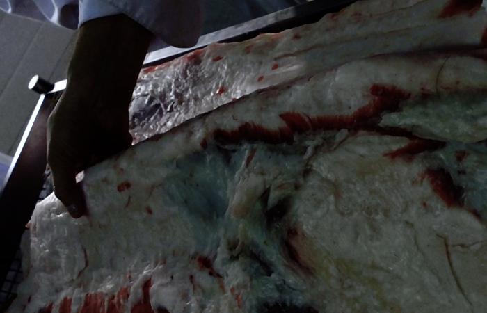 Pancetta arrotolata di suino nero siciliano 450g