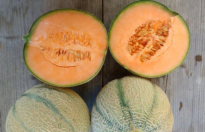 Cantaloupe Melon BIO